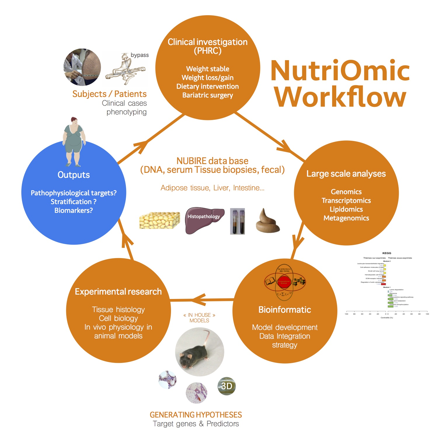 Nutriomics, Team Workflow