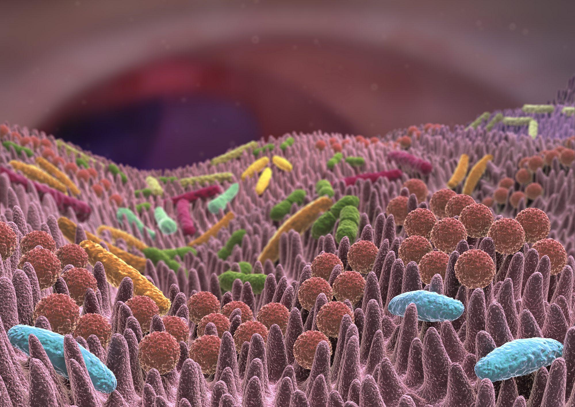 Gut microbiota 3D view, bacteria